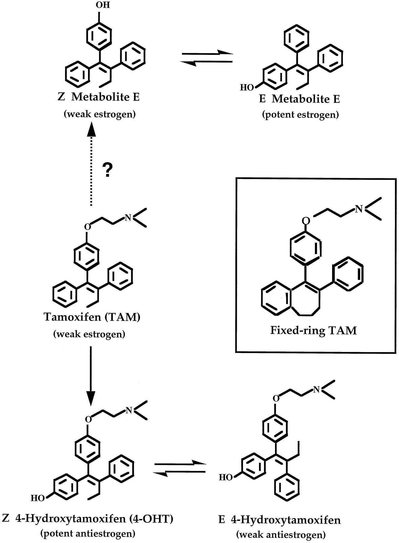 Tamoxifen - Wikipedia