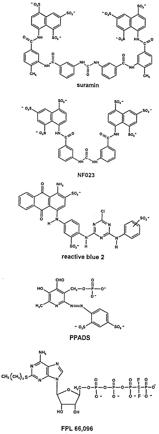 Pharmacology of Purine and Pyrimidine Receptors