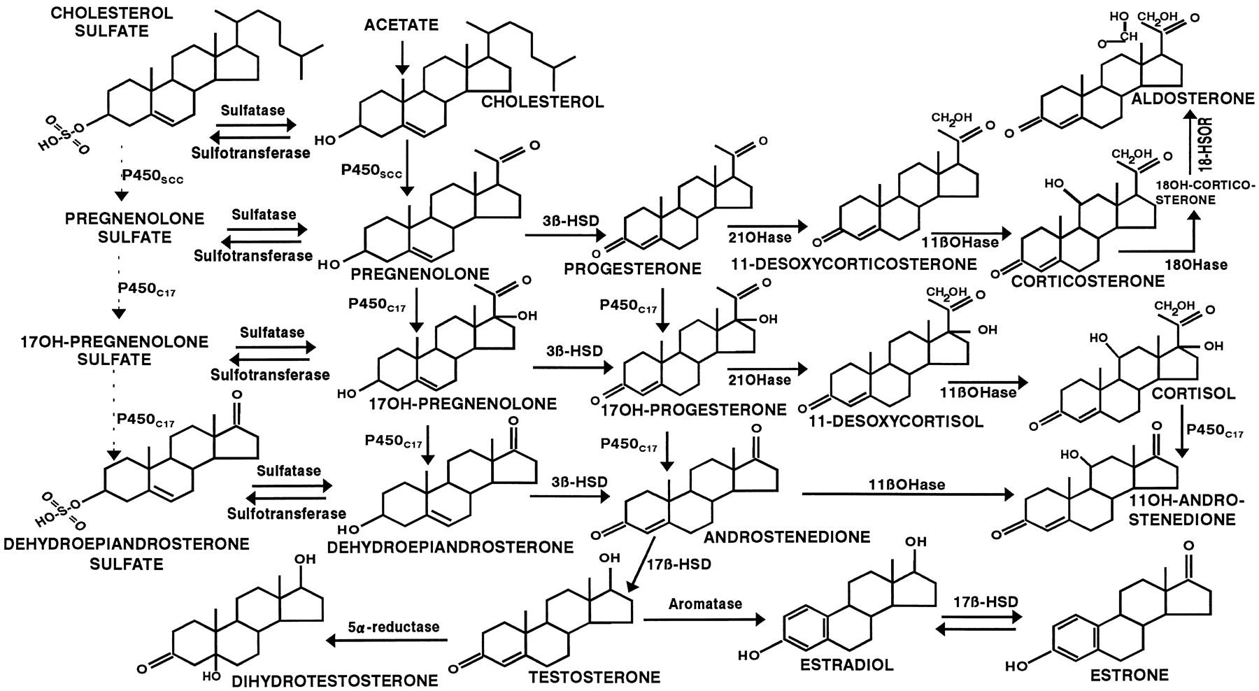 an analysis of steroids as a known synthetic versions of the naturally occurring male sex hormone te Testosterone - almost everything you could is a naturally occurring androgenic anabolic steroid hormone and development of the male sex.