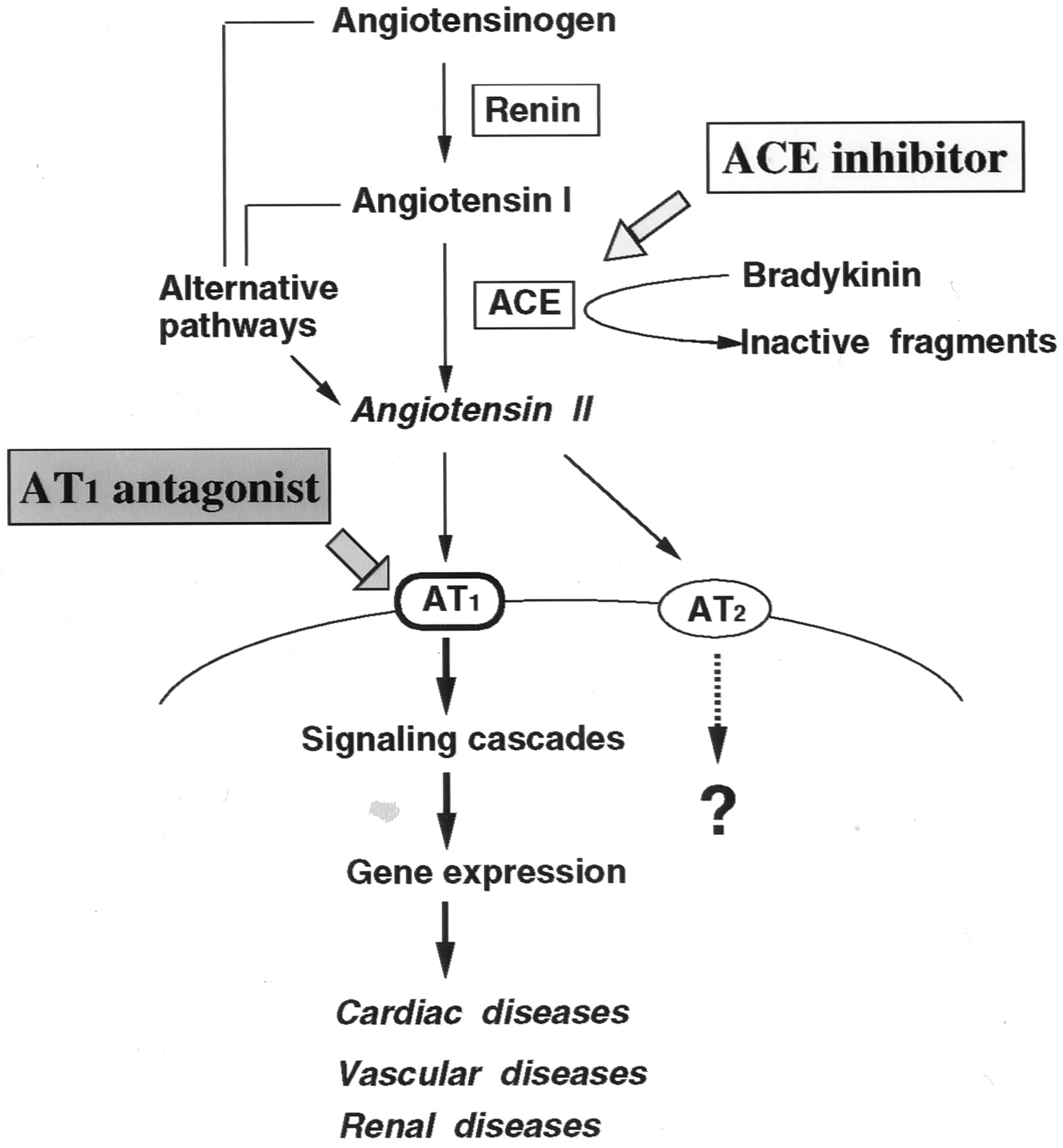 Concept Map Renin Angiotensin Aldosterone Mechanism.Molecular And Cellular Mechanisms Of Angiotensin Ii Mediated