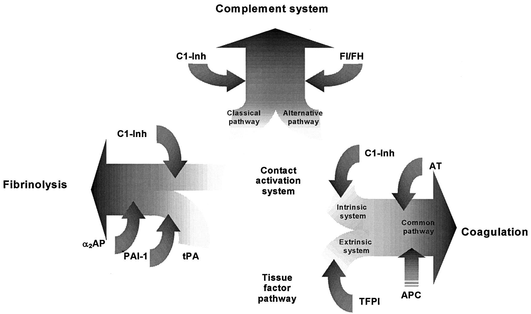 c1 inactivator