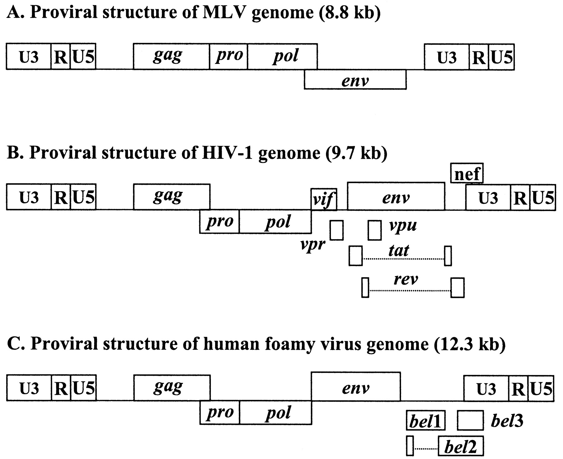 Design Of Retroviral Vectors And Helper Cells For Gene