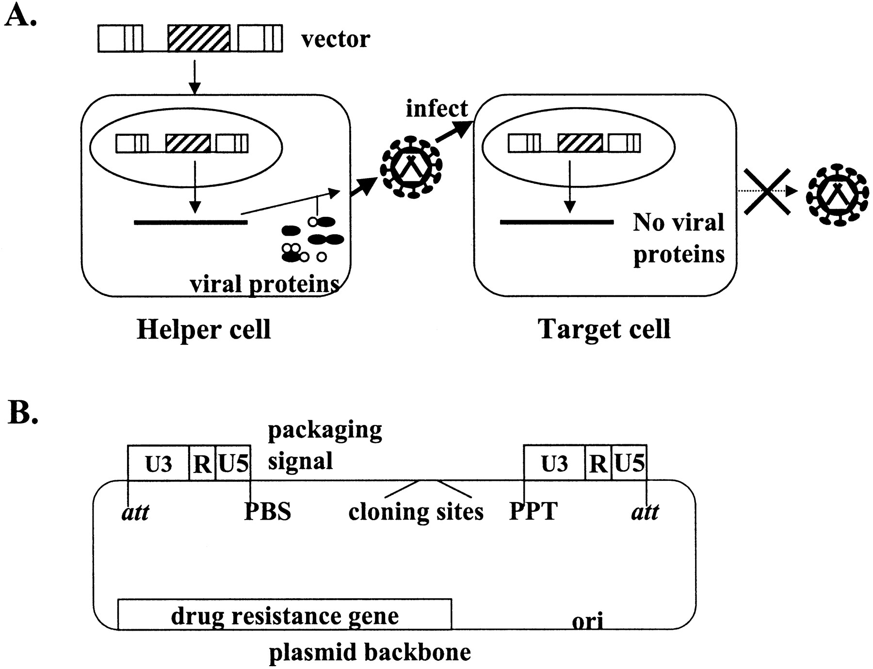 Design Of Retroviral Vectors And Helper Cells For Gene Therapy
