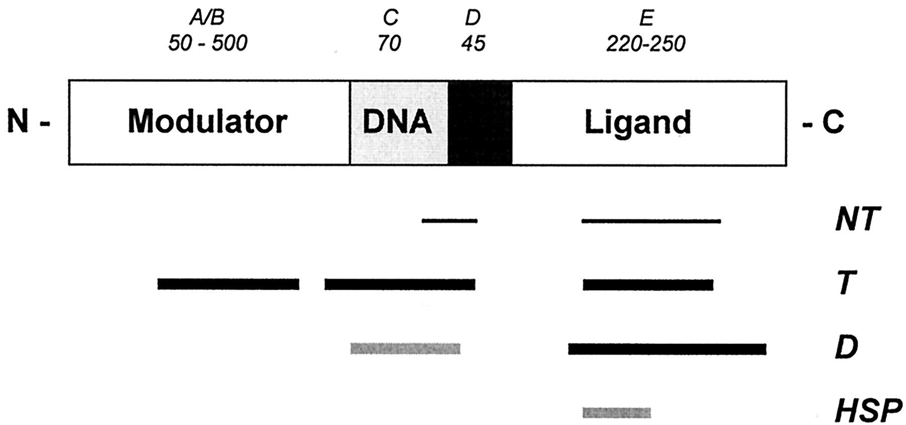 nongenomic steroid signaling