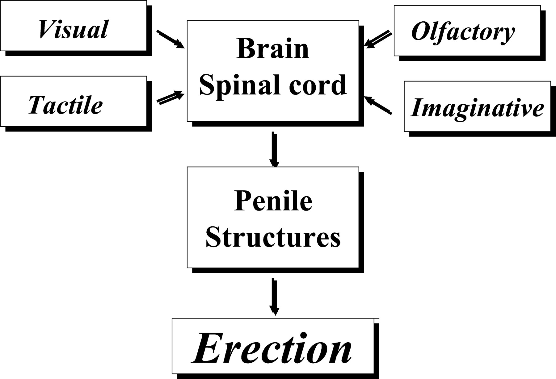 erection low Penis current voltage with