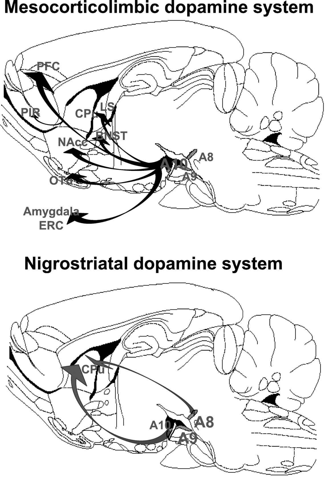 Neurotensin and Dopamine Interactions | Pharmacological Reviews