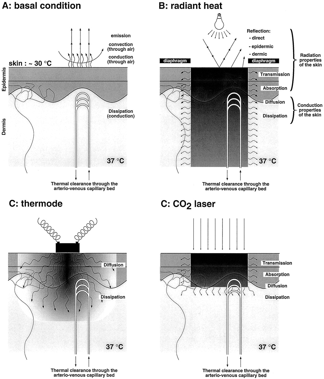 Animal Models Of Nociception Pharmacological Reviews Square D Contact Block Schematic Download Figure