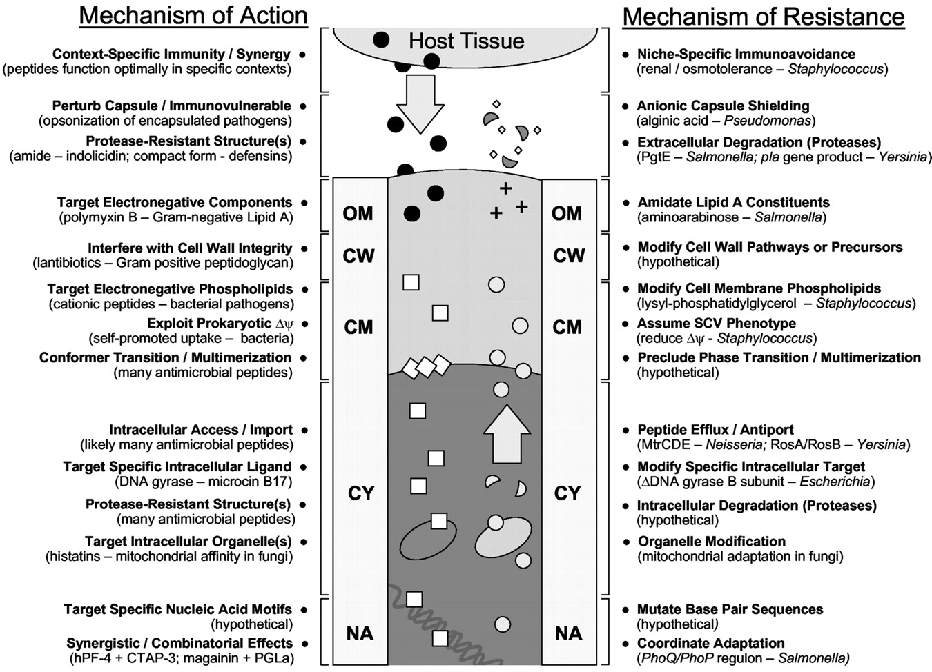 Mechanisms Of Antimicrobial Peptide Action And Resistance