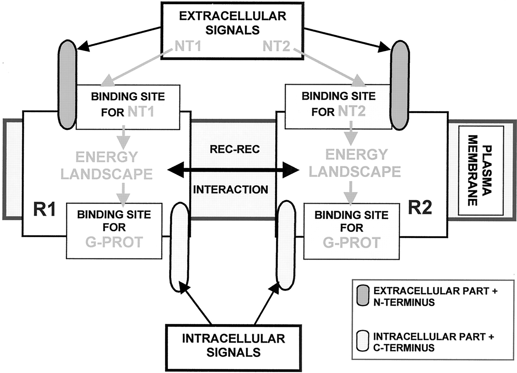 Molecular Mechanisms And Therapeutical Implications Of Intramembrane Hunter Src Wiring Diagram Download Figure