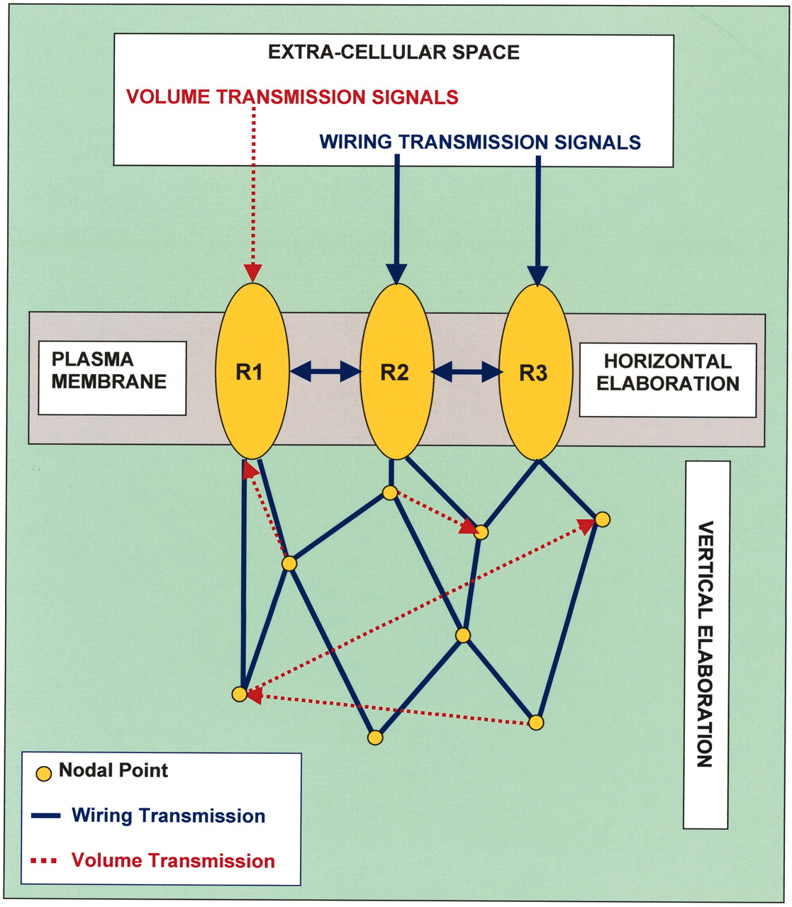 Molecular Mechanisms And Therapeutical Implications Of Intramembrane Wk Hemi Engine Compartment Diagram Download Figure