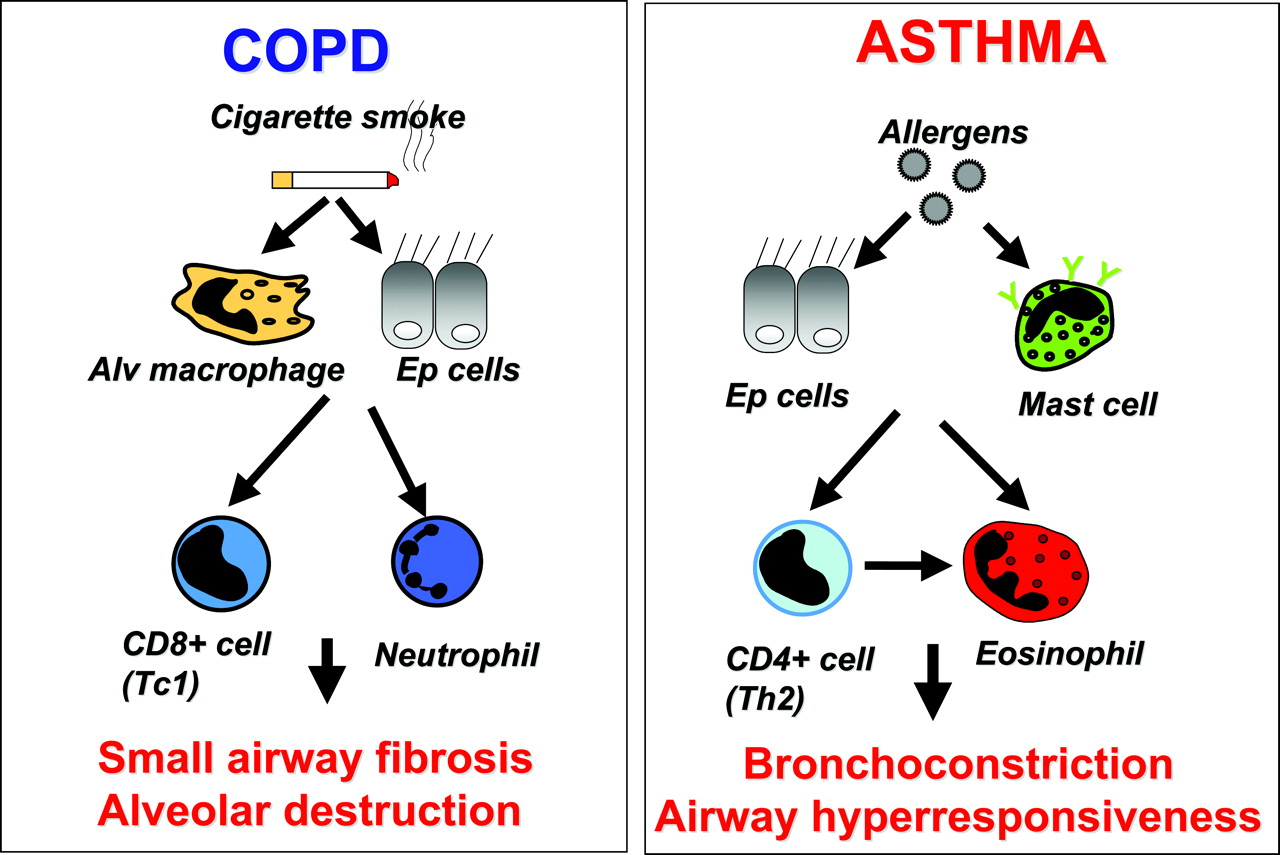Symptoms of emphysema and their pathogenesis