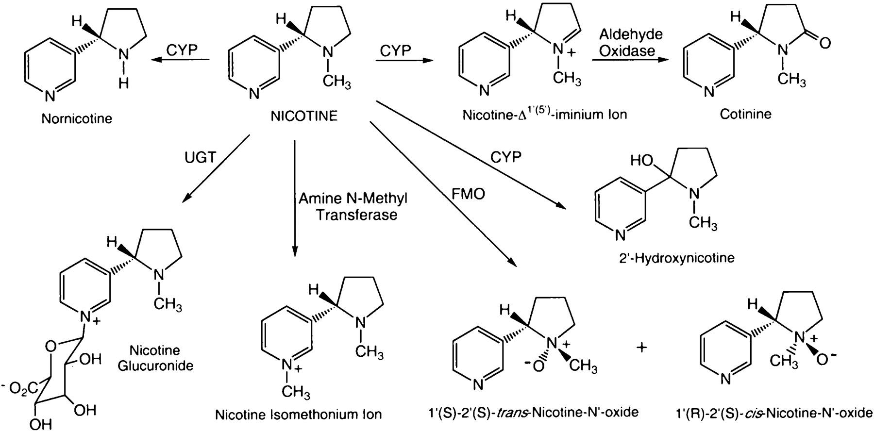 metabolism and disposition kinetics of nicotine
