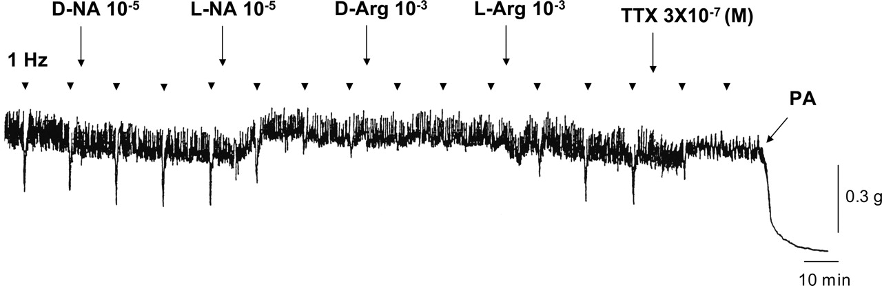 Gastrointestinal Function Regulation by Nitrergic Efferent Nerves ...
