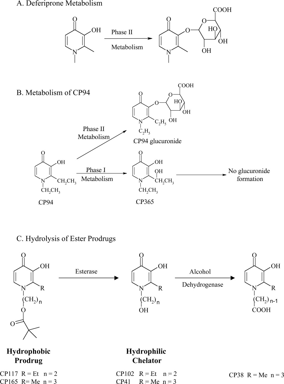 The Evolution of Iron Chelators for the Treatment of Iron