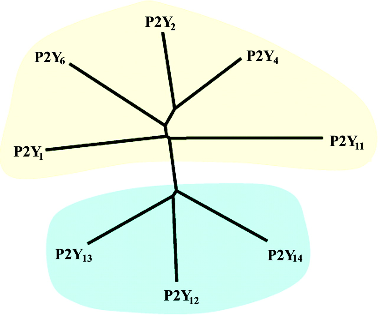 International Union Of Pharmacology Lviii Update On The P2y G Free Tree Diagram Generator 10159 Download Figure