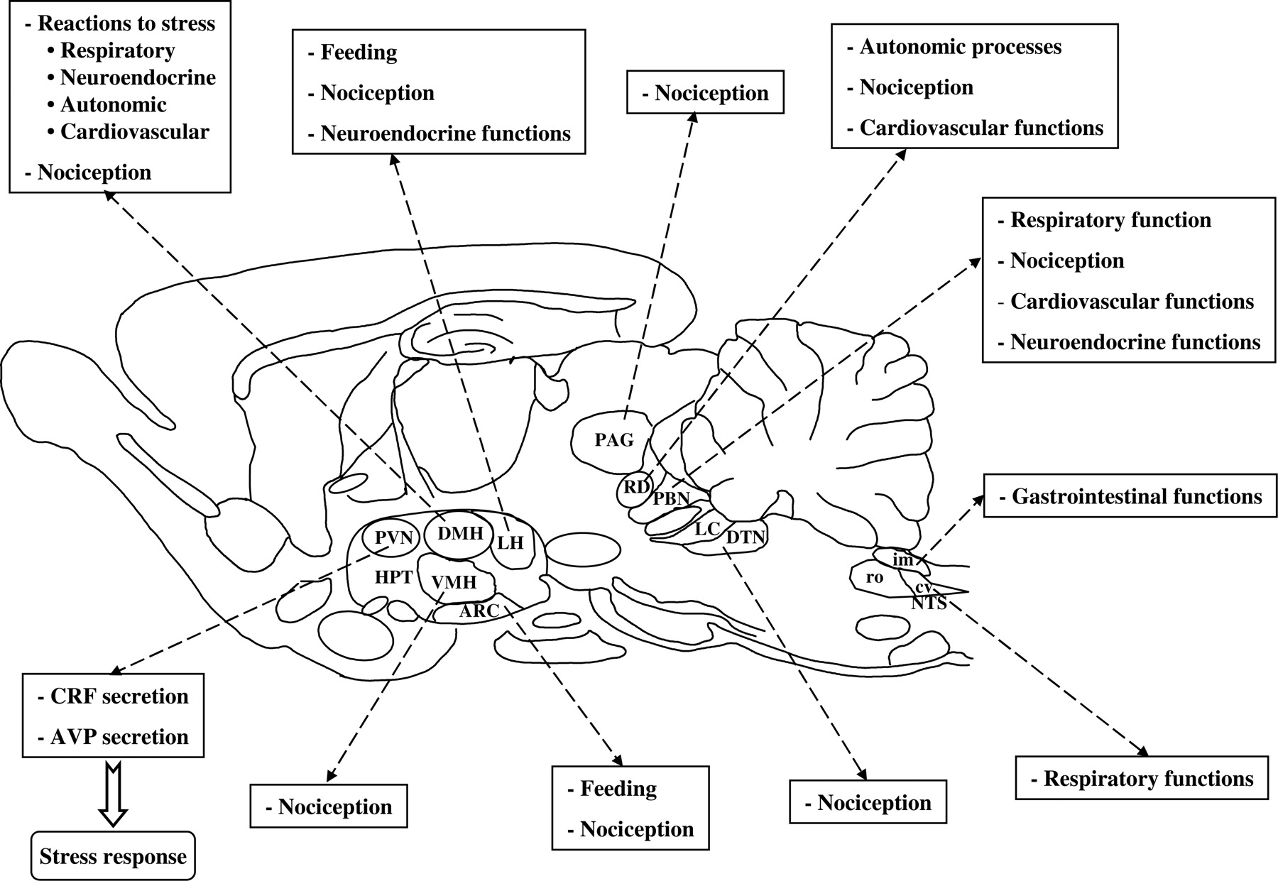 The Endomorphin System and Its Evolving Neurophysiological Role ...
