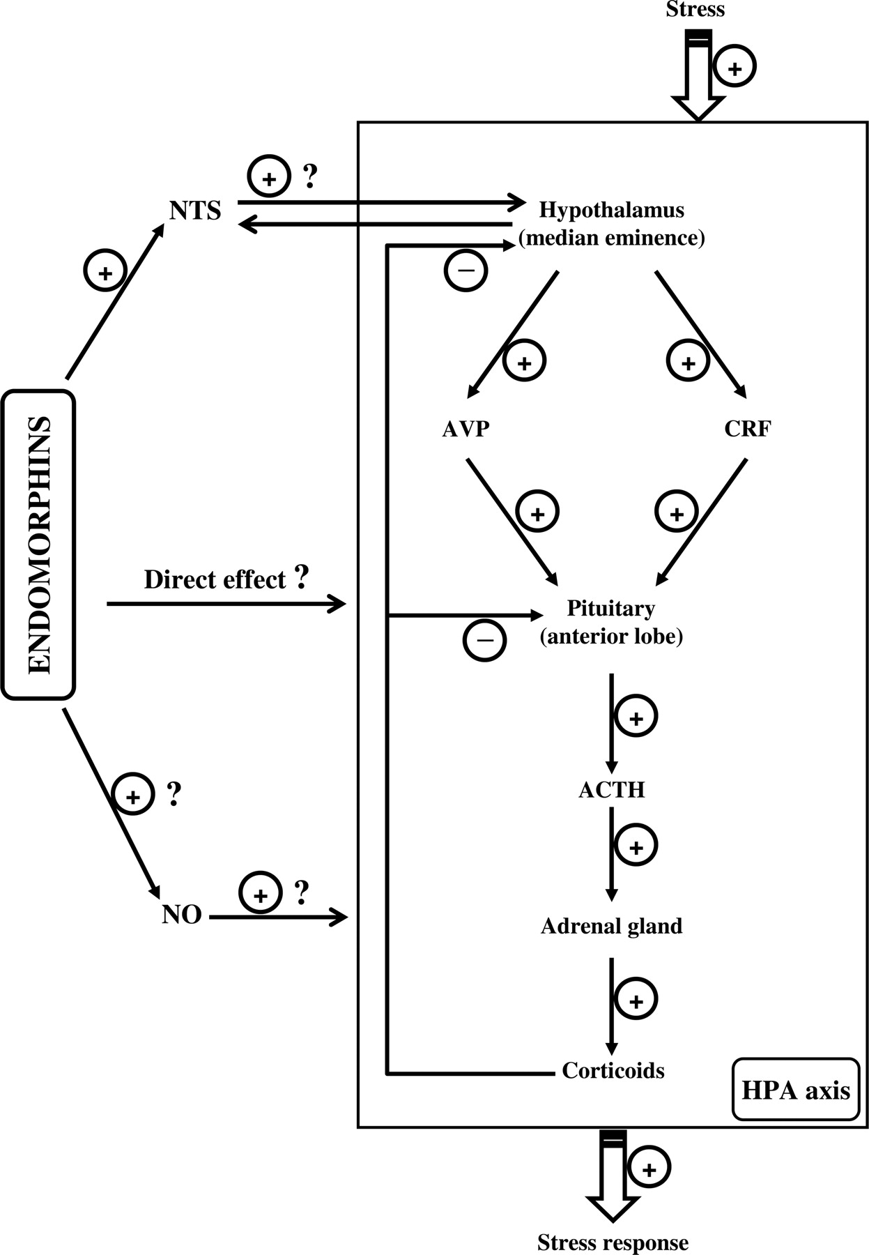 The Endomorphin System and Its Evolving Neurophysiological Role