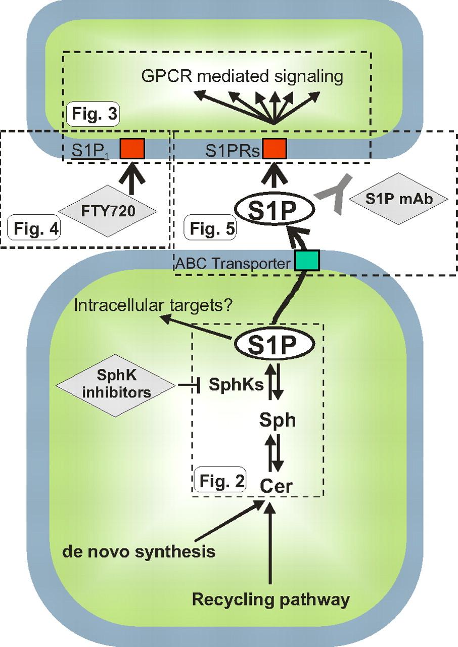 "grande vente c9e2f 23ae0 Inside-Out"" Signaling of Sphingosine-1-Phosphate ..."