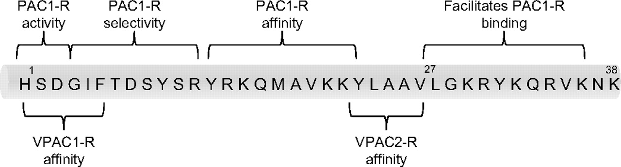 Pituitary Adenylate Cyclase-Activating Polypeptide and Its Receptors