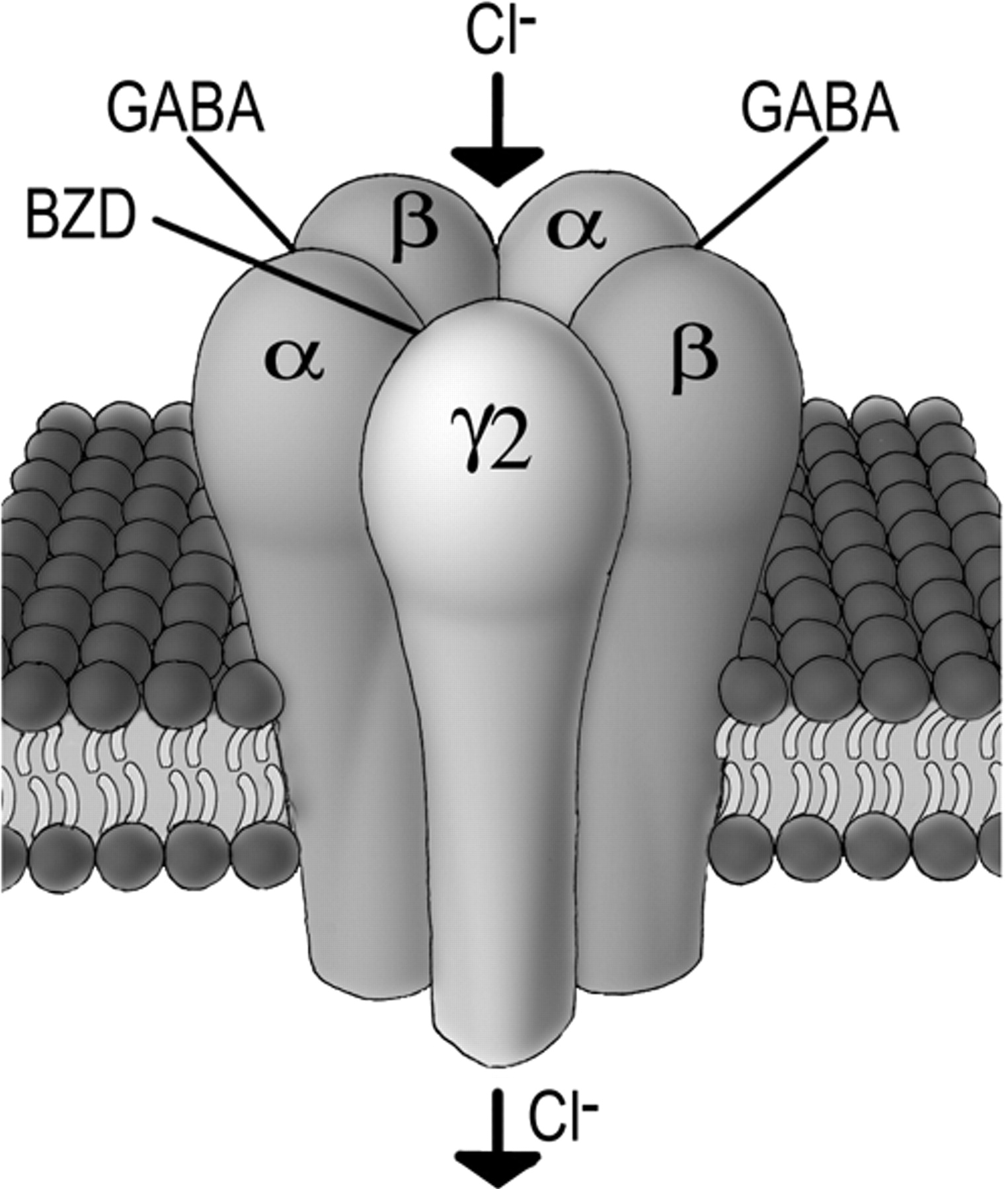 Enhancement Of GABAergic Activity: Neuropharmacological