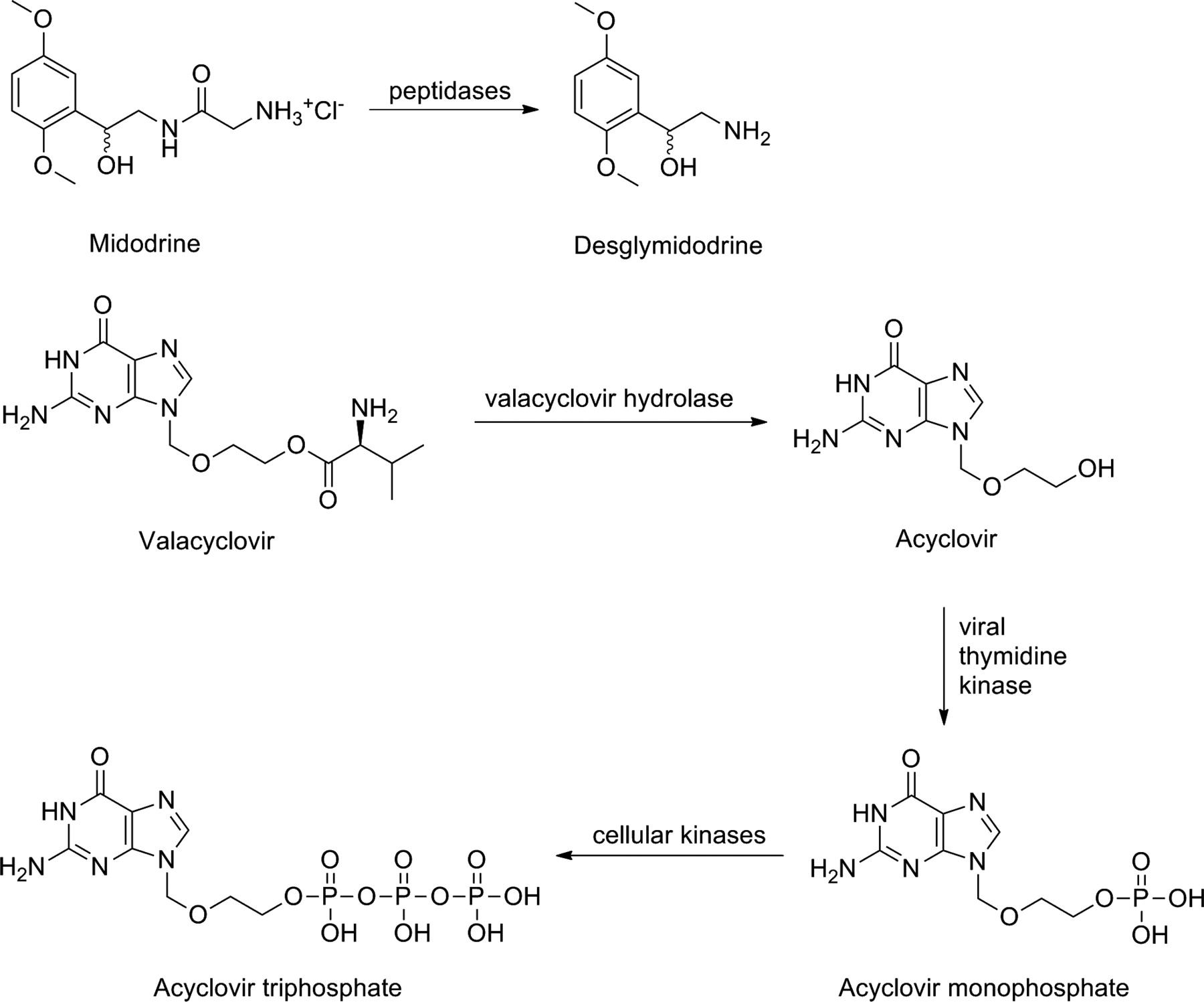 Prodrugs—from Serendipity to Rational Design