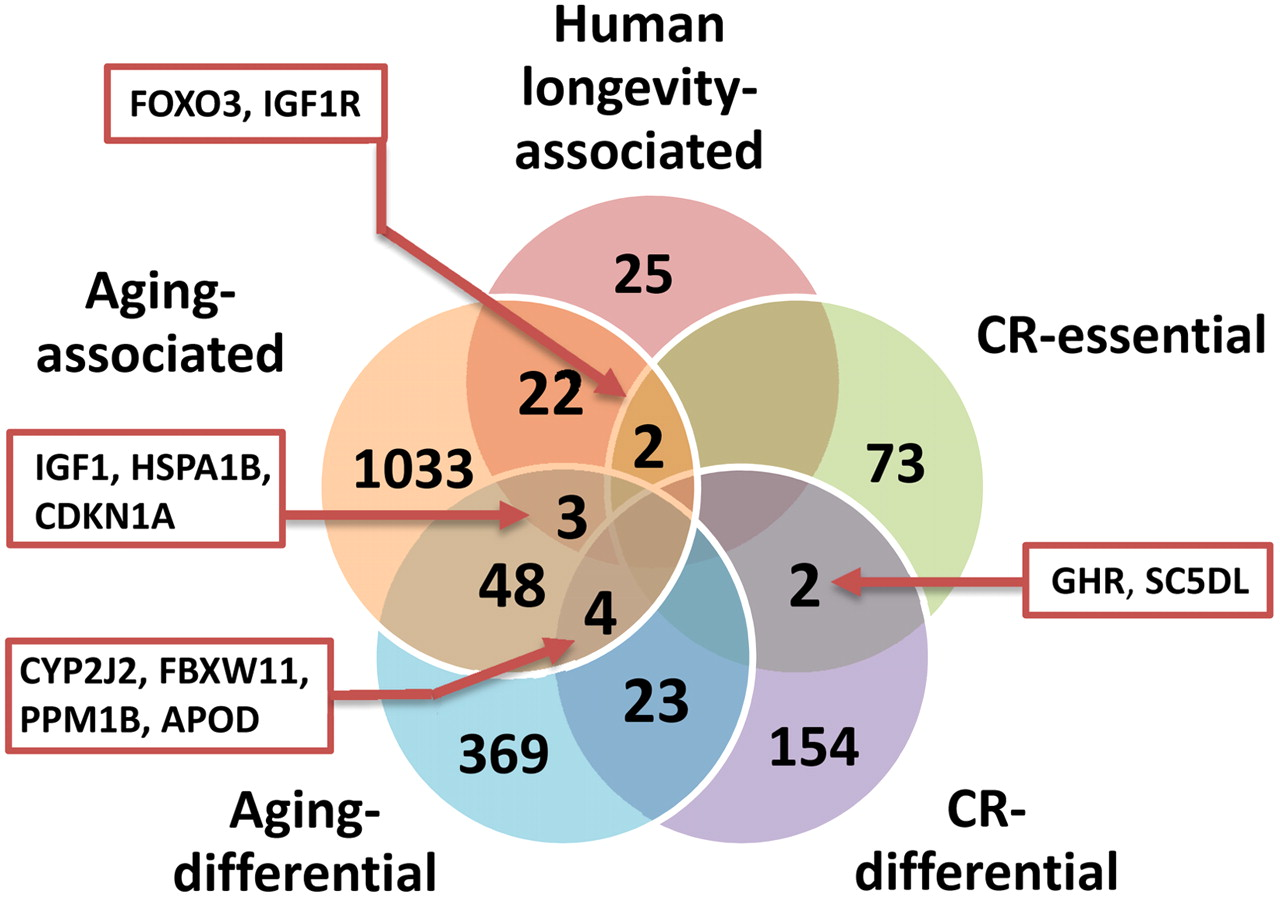 Genome-Environment Interactions That Modulate Aging: Powerful