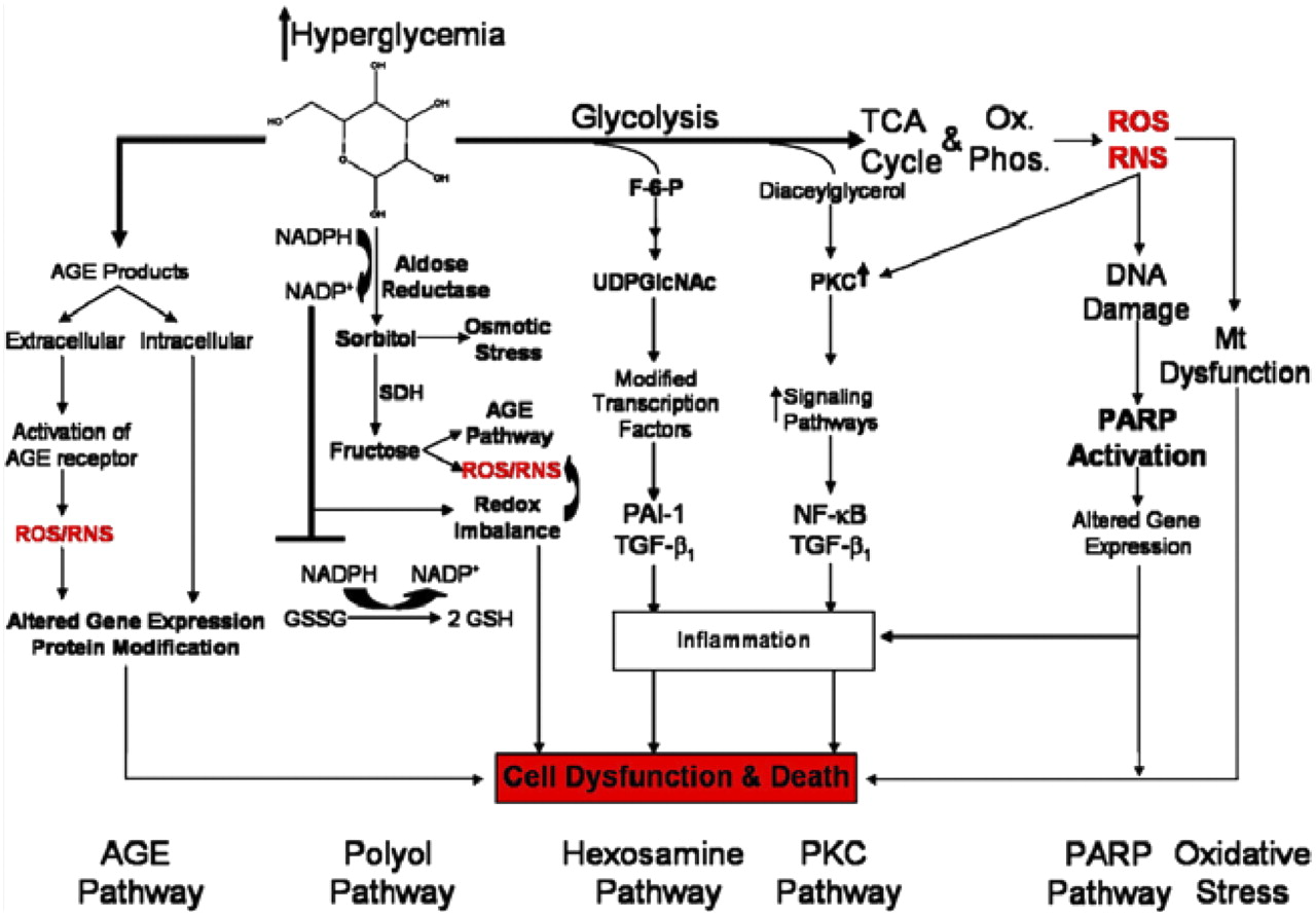 Novel Pharmacological Approaches To The Treatment Of Type 2 Diabetes Cde Ham Iii Wiring Diagram Download Figure