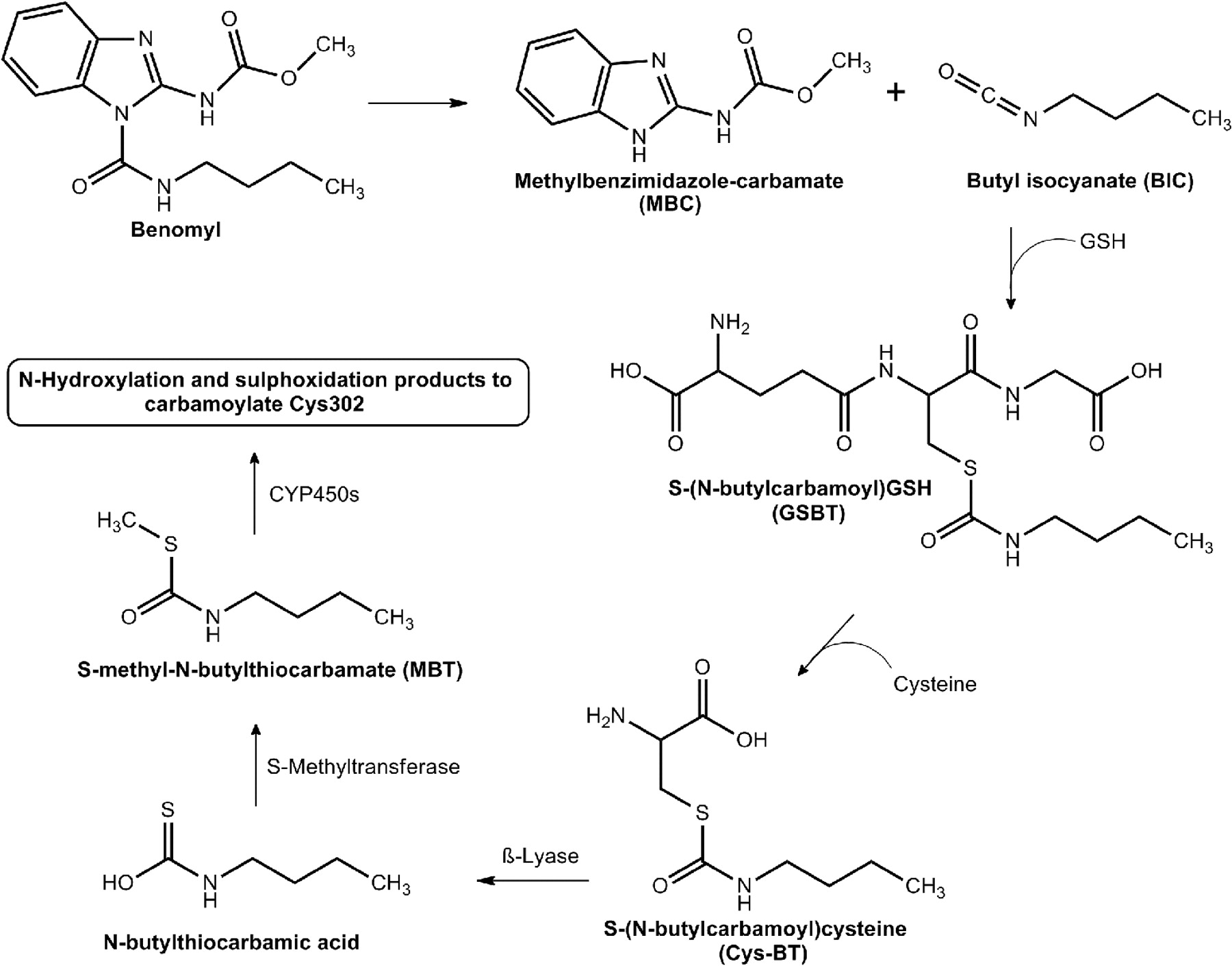 review of 53bp1 inhibitory mechanism in Mechanism of 53bp1 activity regulation by rna-binding tirr  we review recent insights into the mechanisms that influence the choice  dr ross chapman.
