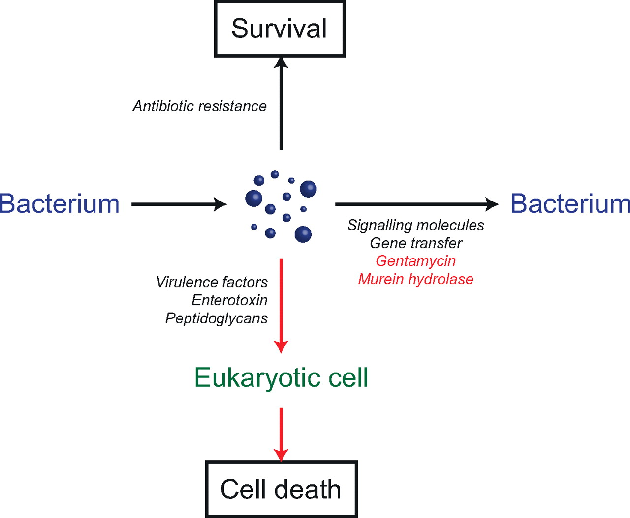 Classification Functions And Clinical Relevance Of Extracellular
