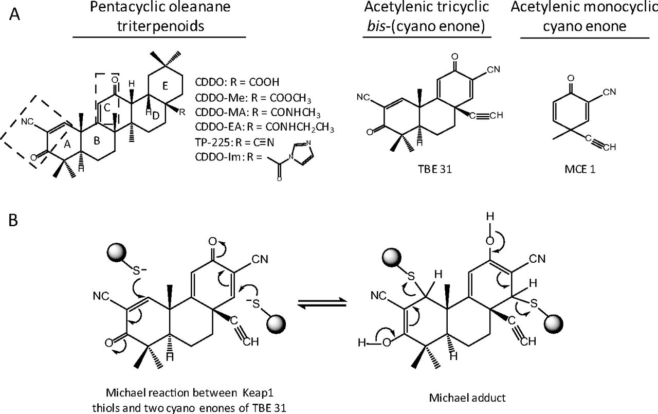 molecular basis of electrophilic and oxidative defense promises and