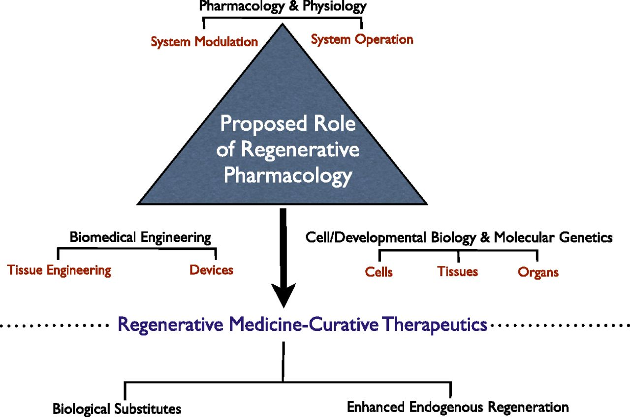 The Pharmacology Of Regenerative Medicine Pharmacological Reviews Click Here For A Pdf Version Theschematic Download Figure Open In New Tab