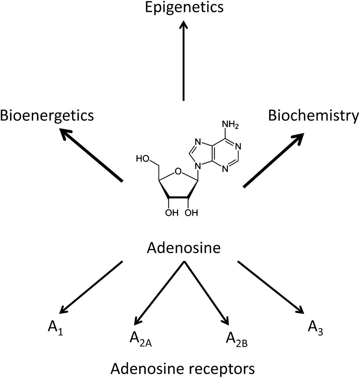 Adenosine Kinase Exploitation For Therapeutic Gain Form Below To Delete This Circuit Board Recycling Image From Our Index Download Figure