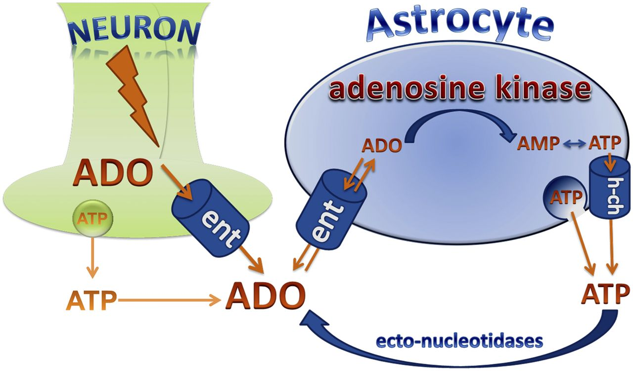 Adenosine Kinase: Exploitation for Therapeutic Gain