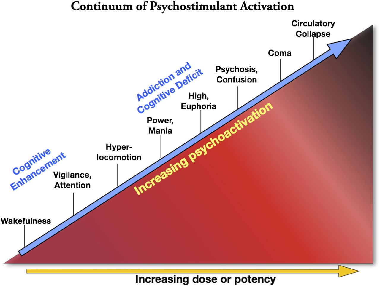 Psychostimulants and Cognition: A Continuum of Behavioral and