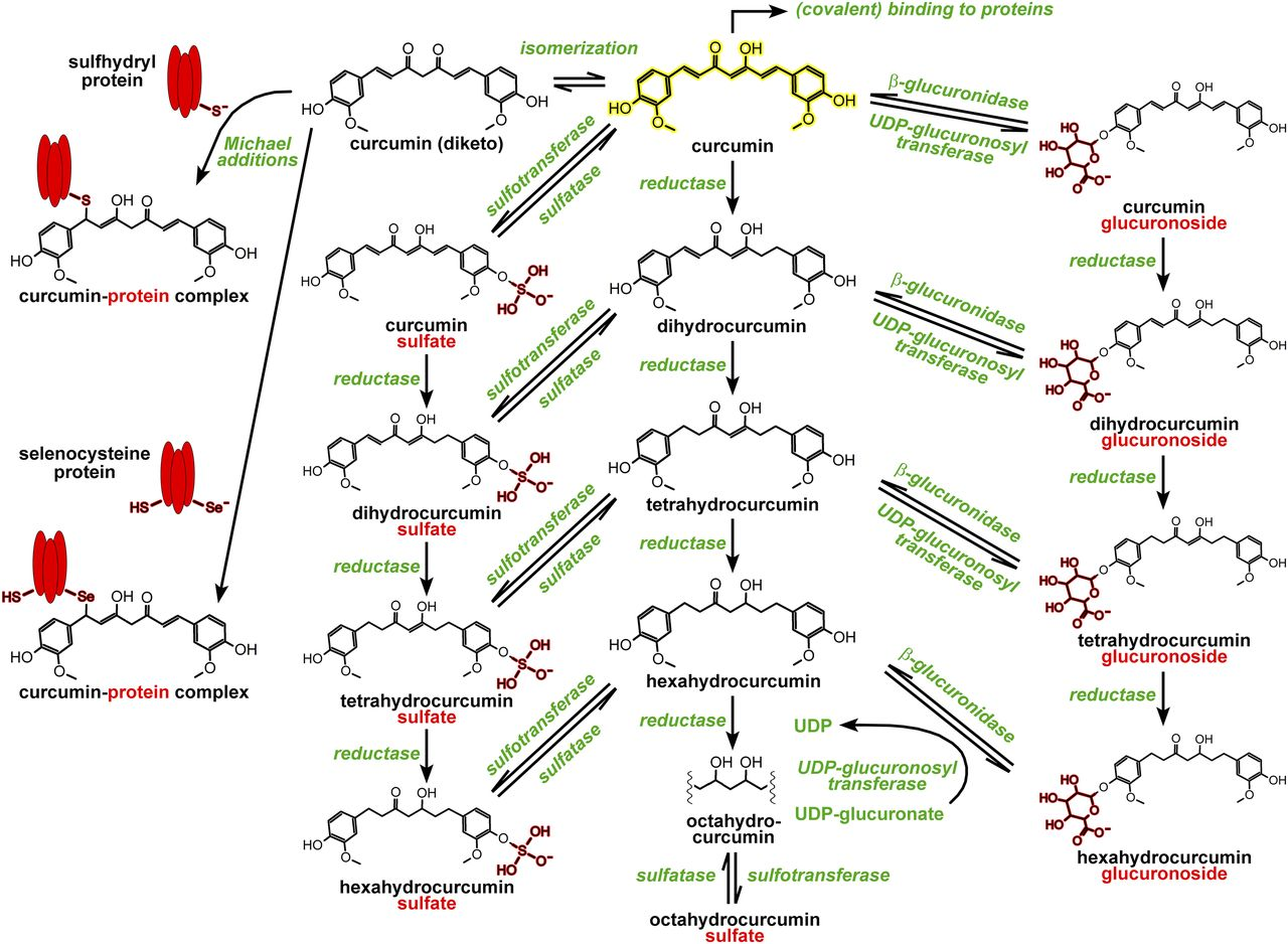 The Molecular Basis for the Pharmacokinetics and Pharmacodynamics of