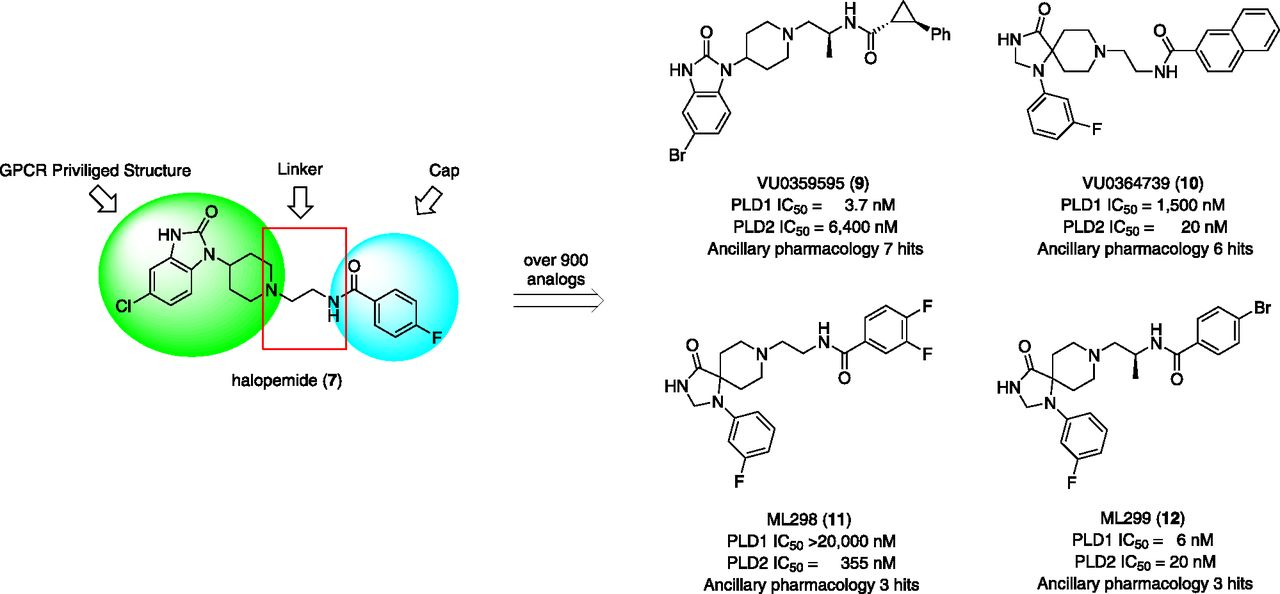 Phospholipase D Signaling Pathways and Phosphatidic Acid as