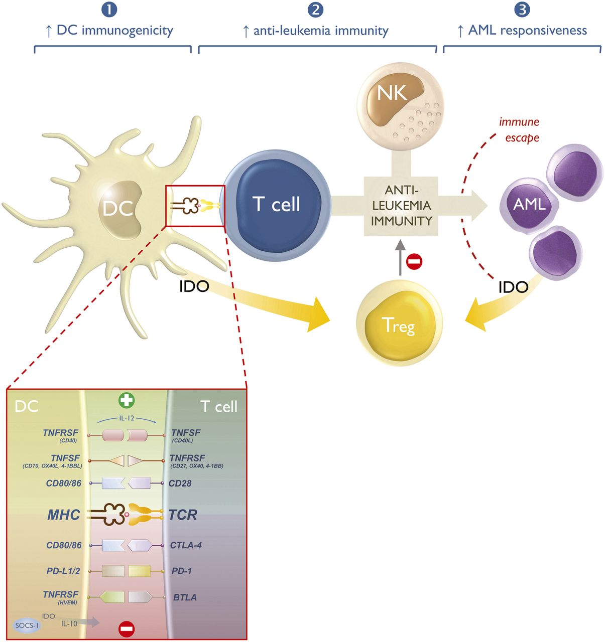 Dendritic Cells as Pharmacological Tools for Cancer