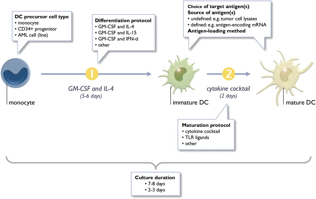 Dendritic Cells as Pharmacological Tools for Cancer Immunotherapy