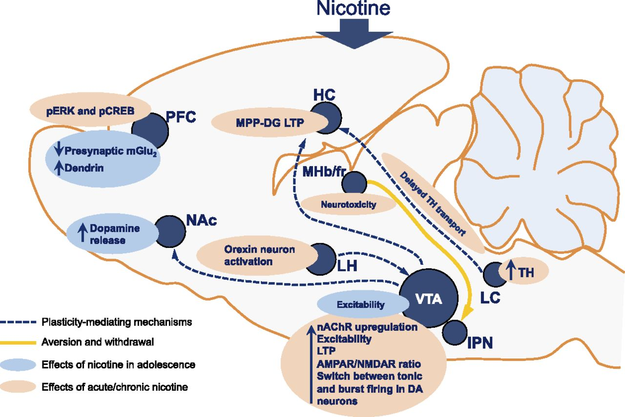 Mechanisms of Action and Persistent Neuroplasticity by Drugs