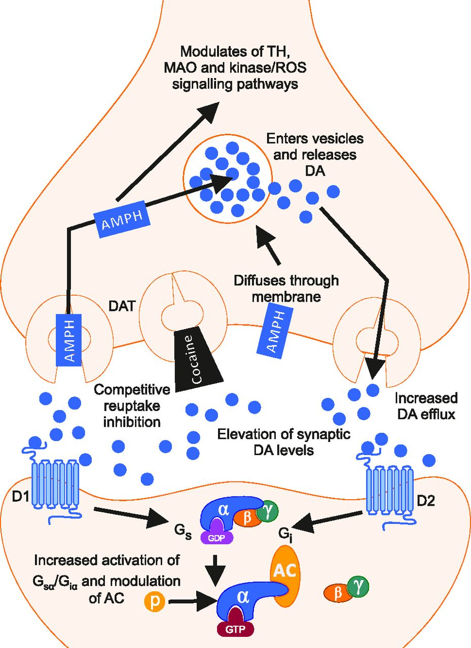 Mechanisms of Action and Persistent Neuroplasticity by Drugs of