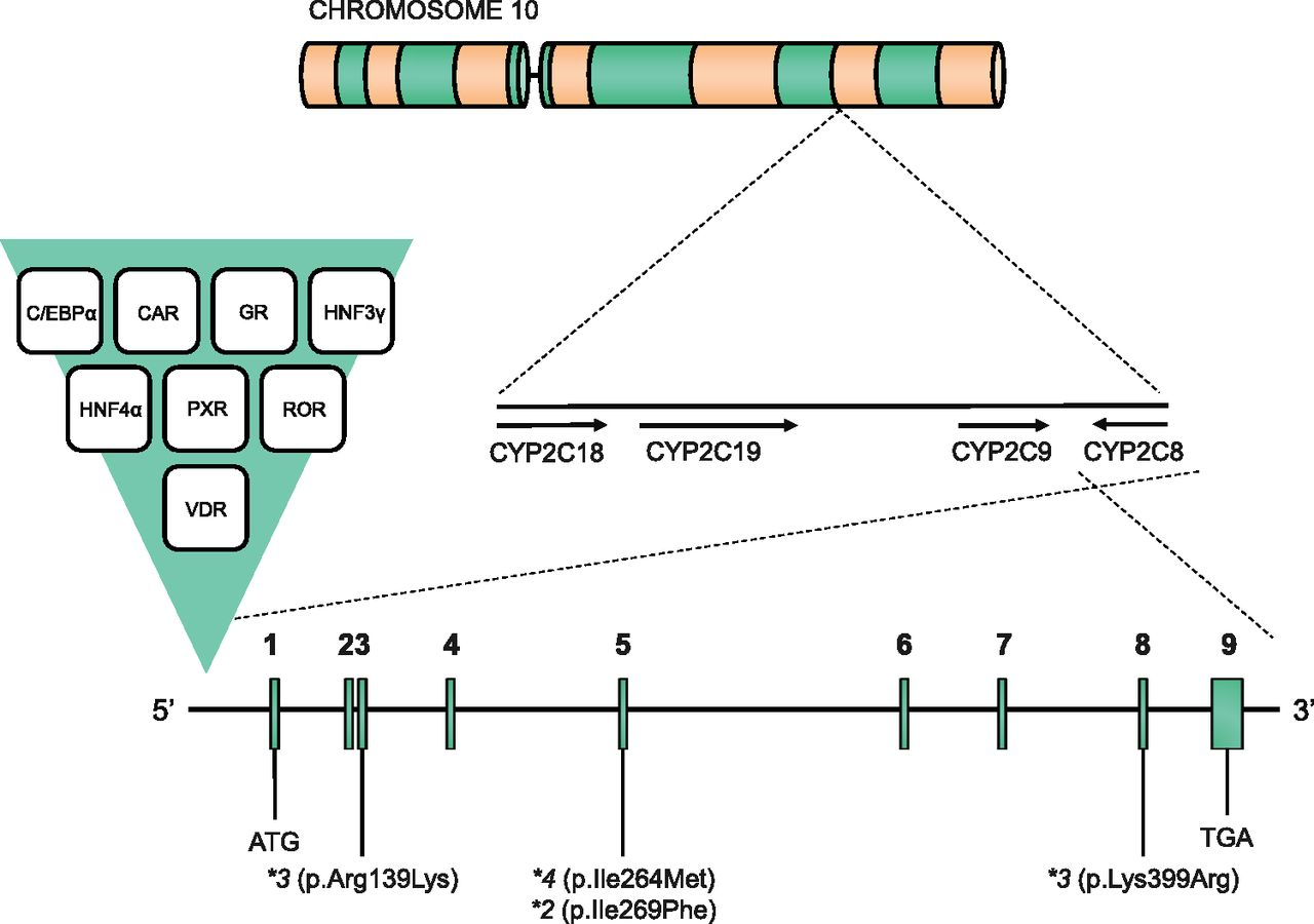 Role of Cytochrome P450 2C8 in Drug Metabolism and Interactions ...