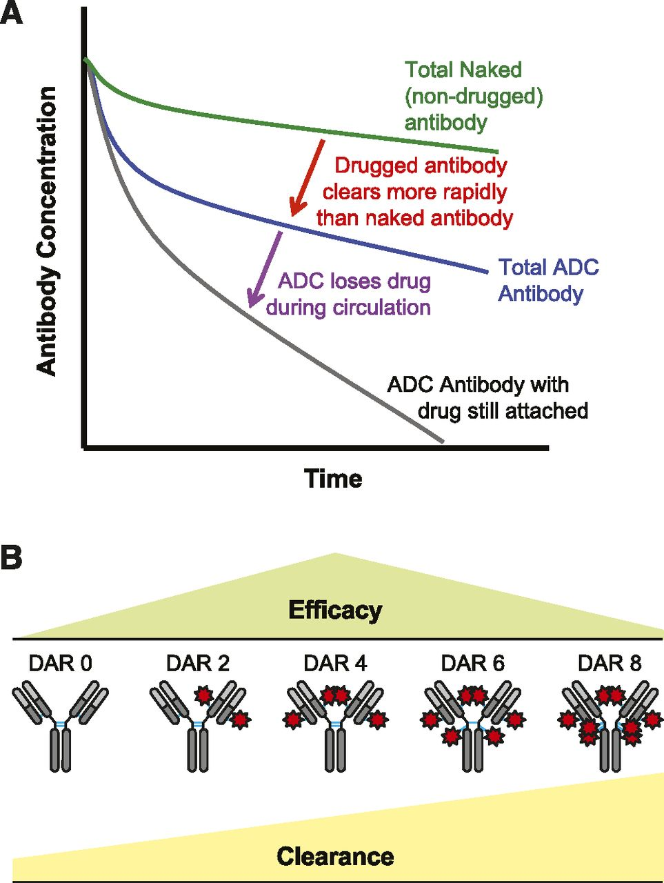 Antibody Drug Conjugates for Cancer Therapy | Pharmacological Reviews