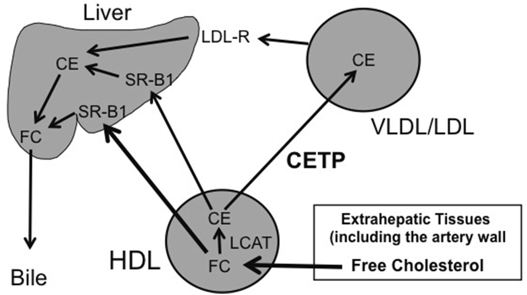 New Era of Lipid-Lowering Drugs | Pharmacological Reviews