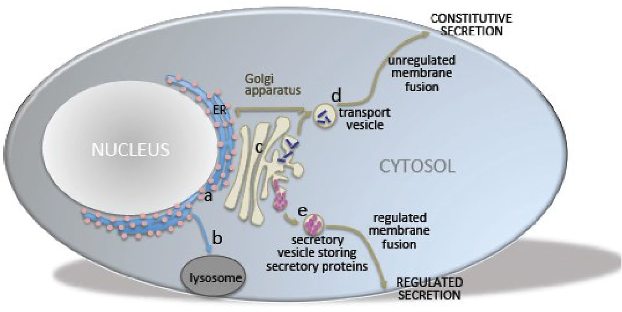 Molecular Pharmacology Of Opioid Receptors Pharmacological Reviews Plate Circuitry Location Dallas Fort Worth Area Current Electro Download Figure Open In New Tab