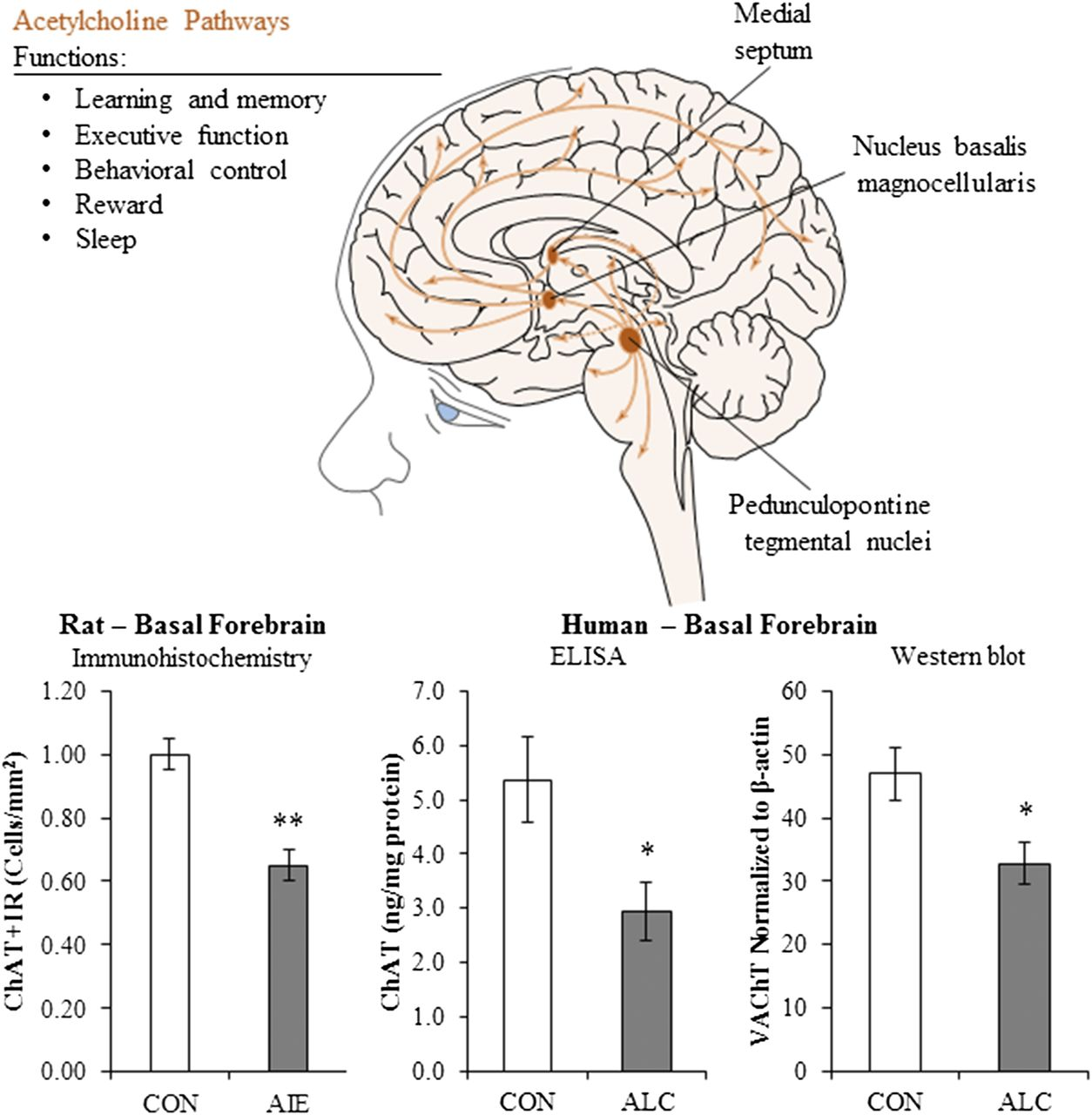 Adolescent Alcohol Exposure Persistently Impacts Adult Neurobiology Oliver 60 Wiring Diagram Download Figure