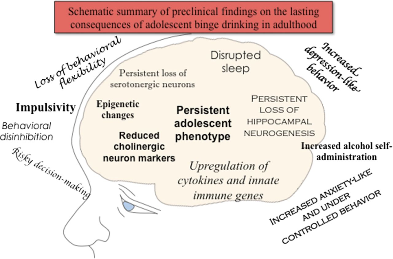 Adolescent Alcohol Exposure Persistently Impacts Adult Neurobiology Gs 750 Wiring Diagram Download Figure