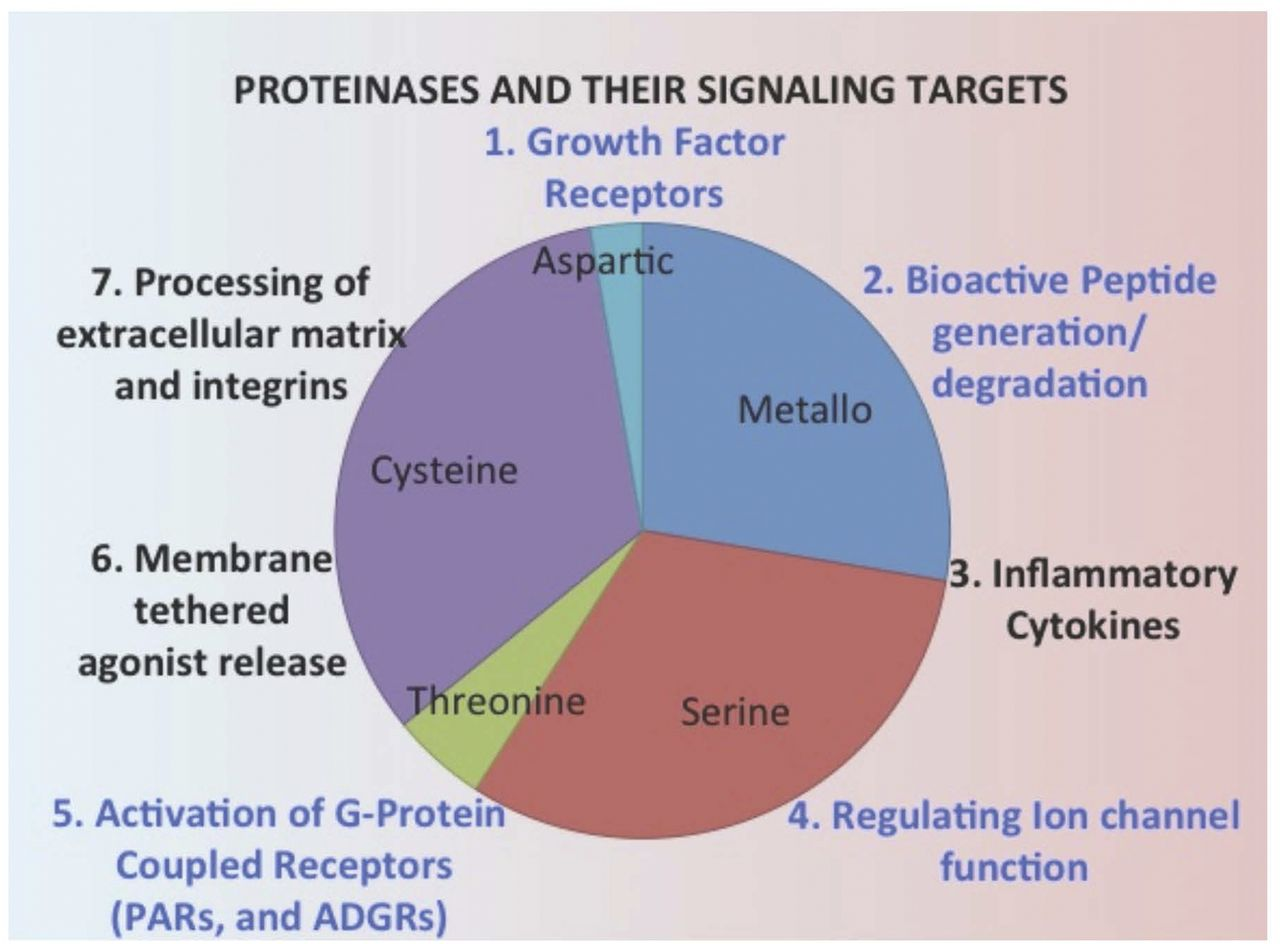 Proteinases, Their Extracellular Targets, and Inflammatory