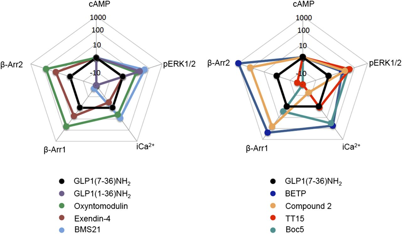 Glucagon Like Peptide 1 And Its Class B G Proteincoupled Receptors Smith Jones Motors 2 Hp Wiring Diagram Download Figure