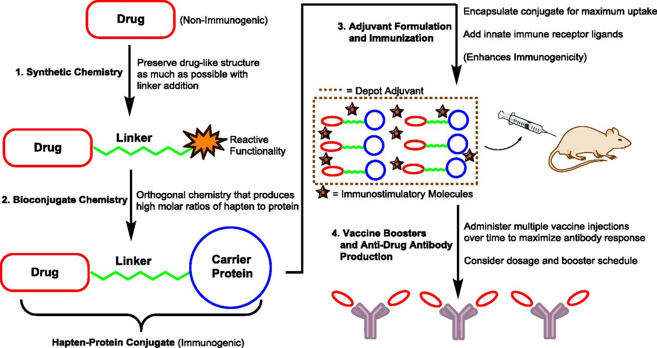 Conjugate Vaccine Immunotherapy for Substance Use Disorder