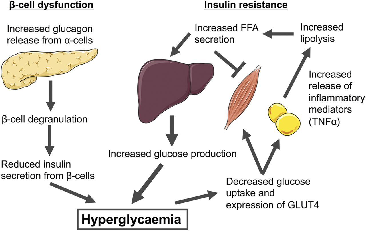G Protein–Coupled Receptors Targeting Insulin Resistance, Obesity